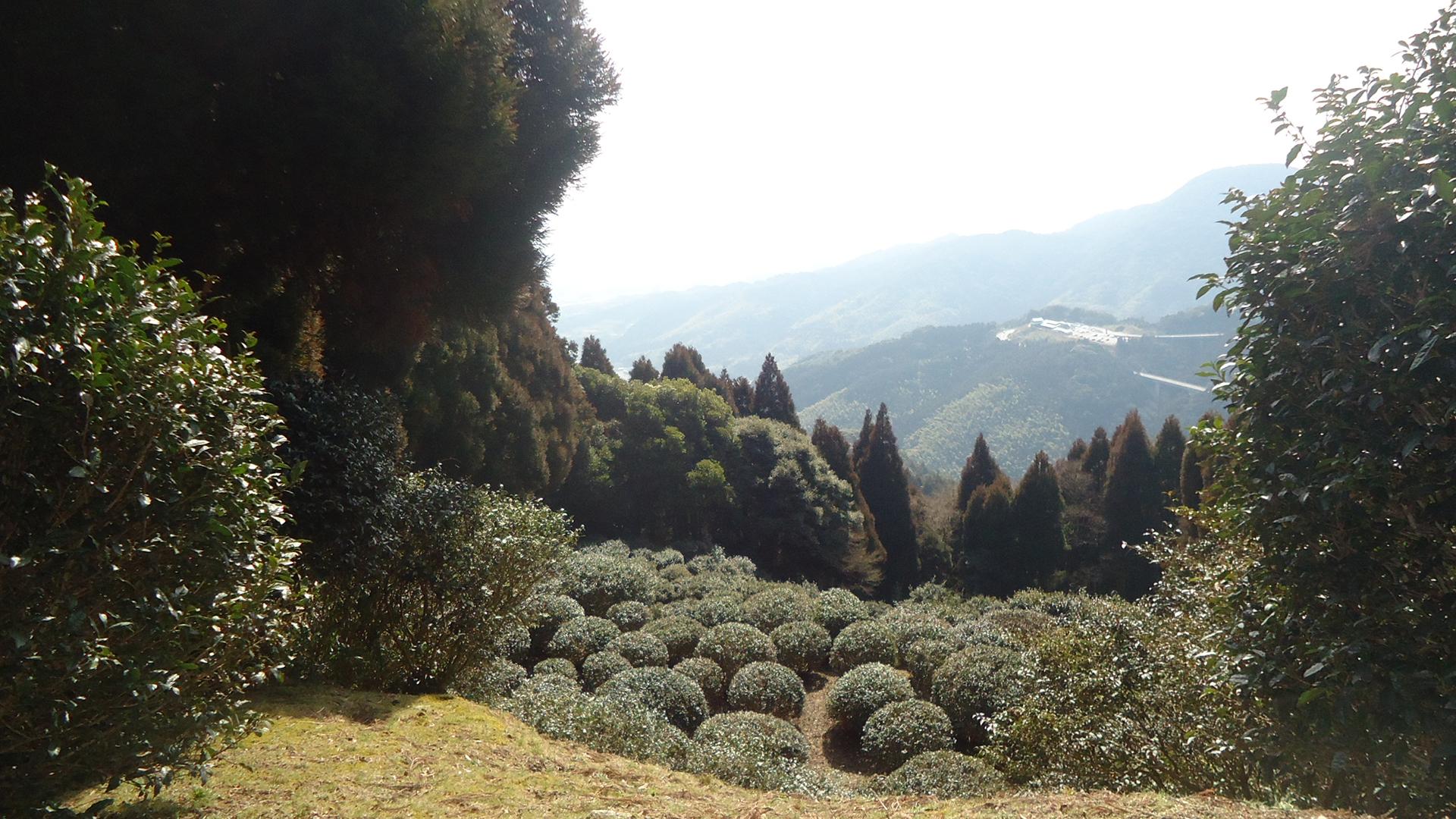 佐賀県神埼郡吉野ヶ里町 - 霊仙寺跡